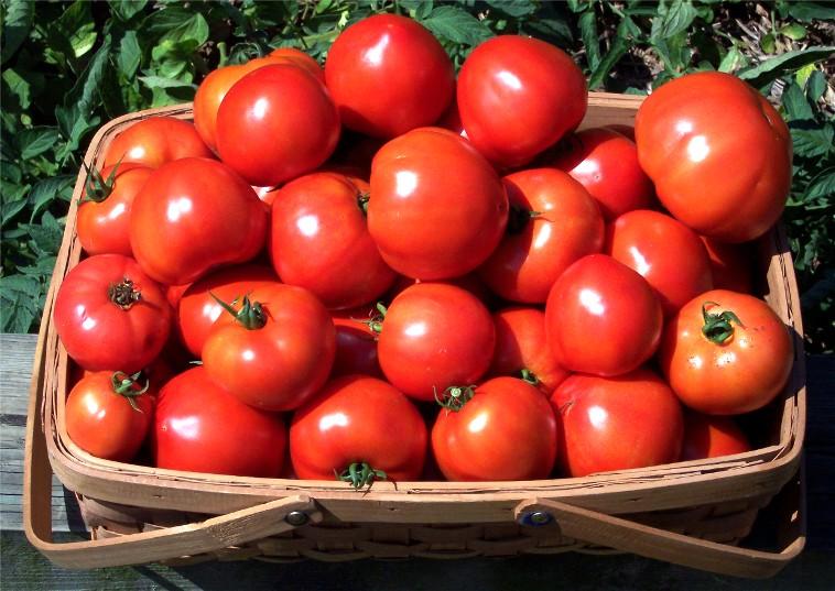 pomidori-anymenu